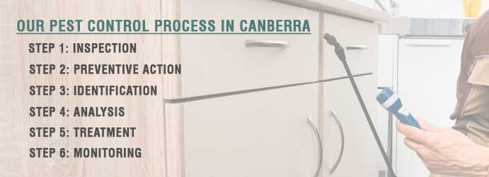 Our Pest Control Process in Canberra