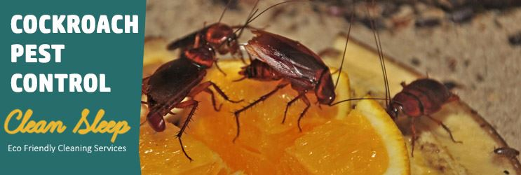 Cockroach Control Service Launceston