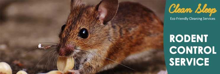 Rodent Control Service Knowsley