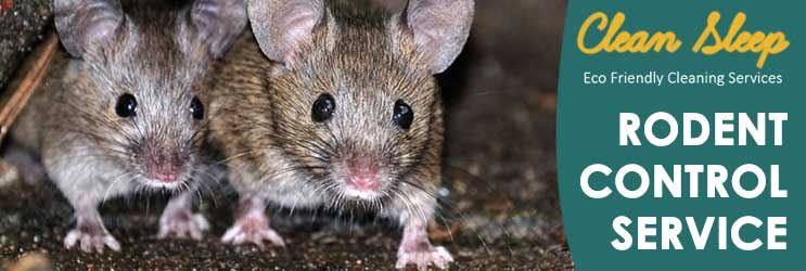 Rodent Control Service Broadway Nedlands