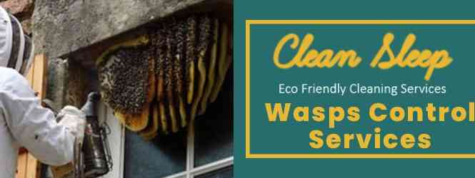 Wasps Control Services