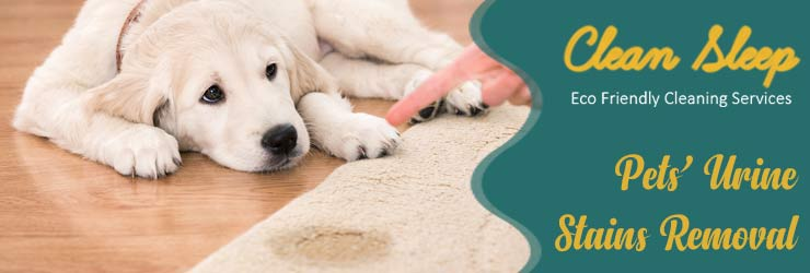 Carpet Pet's Stain Removal Services