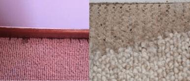 Carpet Moth Damage Repair Canberra