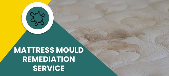 Mattress Mould Remediation Service