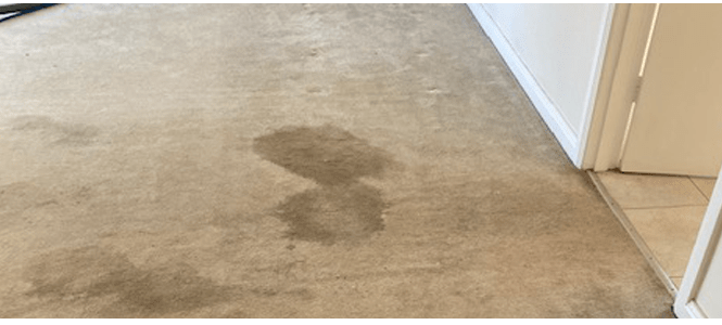 Carpet Cleaning Reduce Germs & Viruses